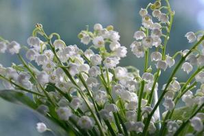 Flowers 4240129 640